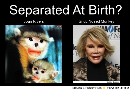 frabz-Separated-At-Birth-Joan-Rivers-Snub-Nosed-Monkey-9c1b55